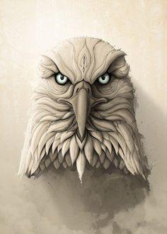 eagle animal animals bird wild