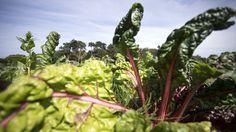 Frugtbart partnerskab sætter skub i bornholmsk frugt og grønt