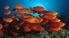 Ocean life Free Wallpaper 20 : HD wallpaper, Background wallpaper