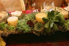 love the succulents and moss with the candles