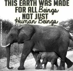 Respect all Beings