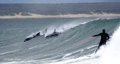 dolphins and surfer Jeffreys Bay Surf Style, Dolphins, South Africa, Places To Go, Surfing, Ocean, Country, Day, Whales