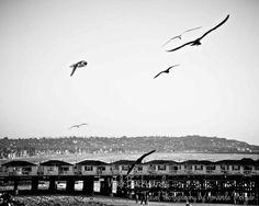 San Diego Pier with Birds Black & White Art Print by WalkBackwards, $30.00