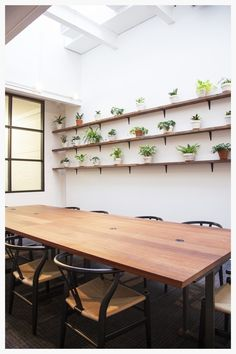 Plant Wall for Kitchensurfing's NYC office designed by Dani Arps with potted plants from The Sill