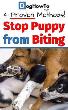 How to stop puppy biting. 4 proven ways to train your puppy to stop biting right away! Use these 4 easy to teach tips to stop your puppy from biting and end the worries, all in this article! Puppy Training Classes, Puppy Training Tips, Training Your Dog, Leash Training, Crate Training, Potty Training, Training Videos, Training Quotes, Training Kit