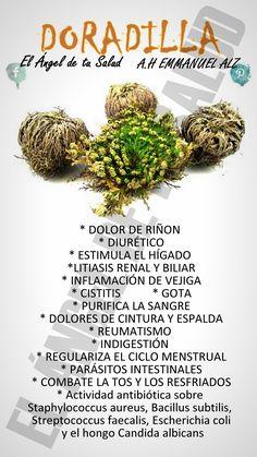 BENEFICIOS DE LA DORADILLA