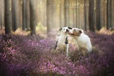 Polish Photographer Takes The Most Stunning Photos of Dogs Ever