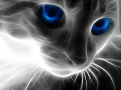 i picked this image for its interesting construction. I like how it almost brings a cat to a molecular level of just lines of energy. The blue for its eyes creates a startling contrast to the white and black drawling the eye.