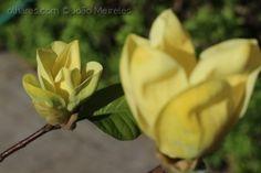 Primavera em Foco Plants, Natural Landscaping, Cook, Recipes, Spring, Plant, Planets