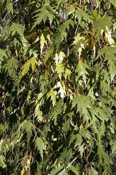 Leksand, Hillaholm - löv