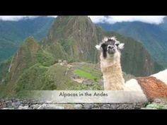 Peru National Anthem