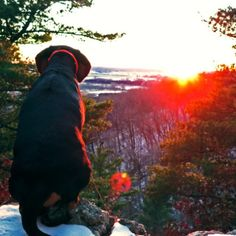 Dog Friendly Vacation Destinations - Wisconsin Dells