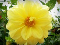 No jardim sem cores. No tempo dará flores. Se plantei chorando.  Sorrindo eu vou voltar. (8