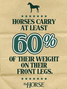 Horse Fact: Horses Carry at least of their weight on their front legs. Really intresting because my horse had surgery on his front legs so now his tendon is really short because of scar tissue. All About Horses, All About Animals, Horse Training, Training Tips, Weird Facts, Fun Facts, Horse Quotes, Horse Sayings, Train Info