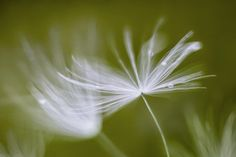 Fluffy by Mandy Disher on 500px