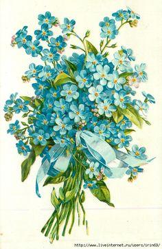 VINTAGE FORGET-ME-NOT FLOWER. Обсуждение на LiveInternet - Российский Сервис Онлайн-Дневников