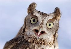 i've always thought that owls had lots of personality