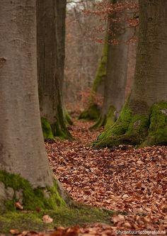 Hierden, Gelderland, Netherlands by Hans Koster on Flickr