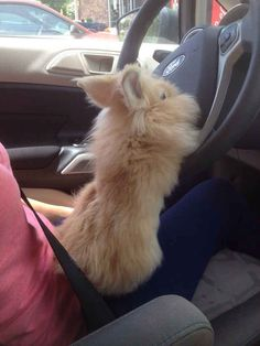 driving bunny dogvacay