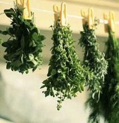 6 {Simple} Ways to successfully preserve your herbs!