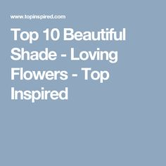 Top 10 Beautiful Shade - Loving Flowers - Top Inspired