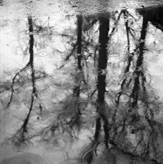 Vivian Maier - Chigaco, North Suburbs (Rippled Reflection of Trees in Puddle), c. 1967-68