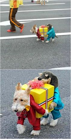 Double Doggy - These 24 Halloween Pet Costumes may Just be Better than Your Own! What's cuter than a puppy ballerina? Perhaps a cat as a dinosaur? Or a snake in a hat? If you want to get your beloved pet involved in Halloween this year, then these costume ideas will serve you well, my friend! Feel free to share this with your fellow pet-crazy friends! #halloween #pets #dogs #cats #costume