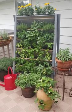 How to Dry Herbs DIY I think I may have been a little overly ambitious when I planned out my first h Herb Garden Planter, Herb Garden Pallet, Diy Herb Garden, Herb Planters, Herbs Garden, Succulents Garden, Garden Tips, Garden Ideas, Growing Herbs In Pots