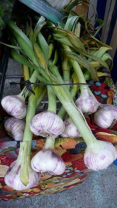 L'ail fraîche sur le marché d'Aix-en-Provence.