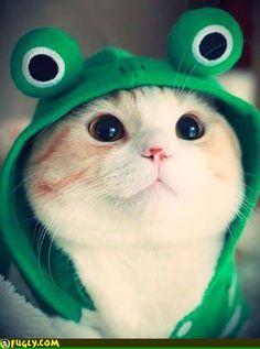 Cat In A Frog Hoodie