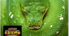 Snake, Blog, Animals, Animales, Animaux, Animal Memes, Animal, Snakes, Animais