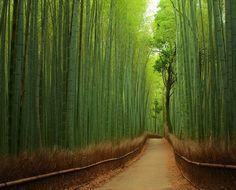 Bosque de bambú en Sagano, Japón