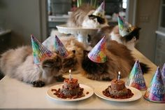Martha Stewart cat birthday party.