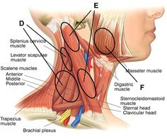 Massage points for neck pain