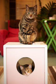 Mom, she's hogging the box!