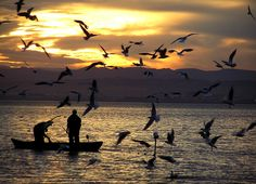 los pajaros by luisjvs, via Flickr
