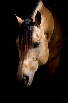 """He looks like the horse """"Moose"""" at the ranch. Thee most awesome horse I'd ever seen.."""