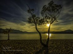 backlit trees (of ) by markbowenfineart