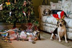 13 People you Always Meet During the Holidays, In Dog Form