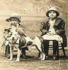 Vintage Pit Bulls