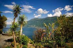 JSPuzzles - Jogue quebra-cabeças online - Palm Trees and Mountains