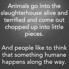 "Can anyone NOT see that ""humane slaughter� is an oxymoron? Can anyone NOT see that ""humane slaughter� is an oxymoron? Vegan Facts, Vegan Memes, Vegan Quotes, Reasons To Be Vegan, Why Vegan, Stop Animal Cruelty, Vegan Animals, Statements, Vegan Lifestyle"