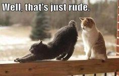 For Luke - rude cat