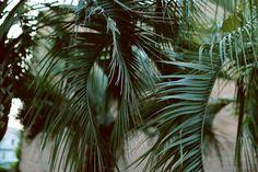 Hawaiian Coconut