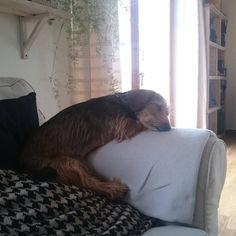 Poppy śpi w coraz dziwniejszych pozach 😆 #domhgtv #domHGTV Tiana, Furniture, Instagram, Home Decor, Decoration Home, Room Decor, Home Furnishings, Home Interior Design, Home Decoration