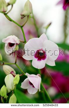 Orchids flowers, Rainforest Flower, Tropical Flower, Asia Flower, Thailand images, wallpapers, backgrounds, patterns / Asia flowers