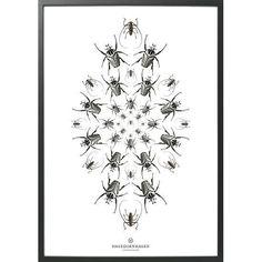 Poster speculo SP3 | Hagedornhagen | designlemonade.com