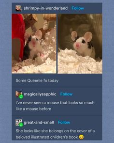 Cute Little Animals, Cute Funny Animals, Funny Cute, Cute Creatures, Beautiful Creatures, Animal Pictures, Cute Pictures, Wholesome Memes, Dibujo