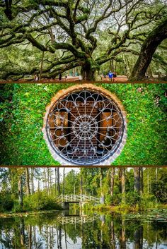 Head outside during a 3-day trip to Charleston, South Carolina with trips to Angel Oak Tree, Cypress Gardens and the historic residential streets of downtown.