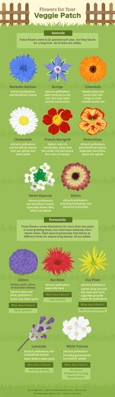 Flowers for garden companion planting and the bees